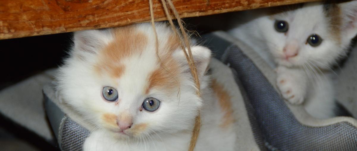 Katzentoilette Ratgeber