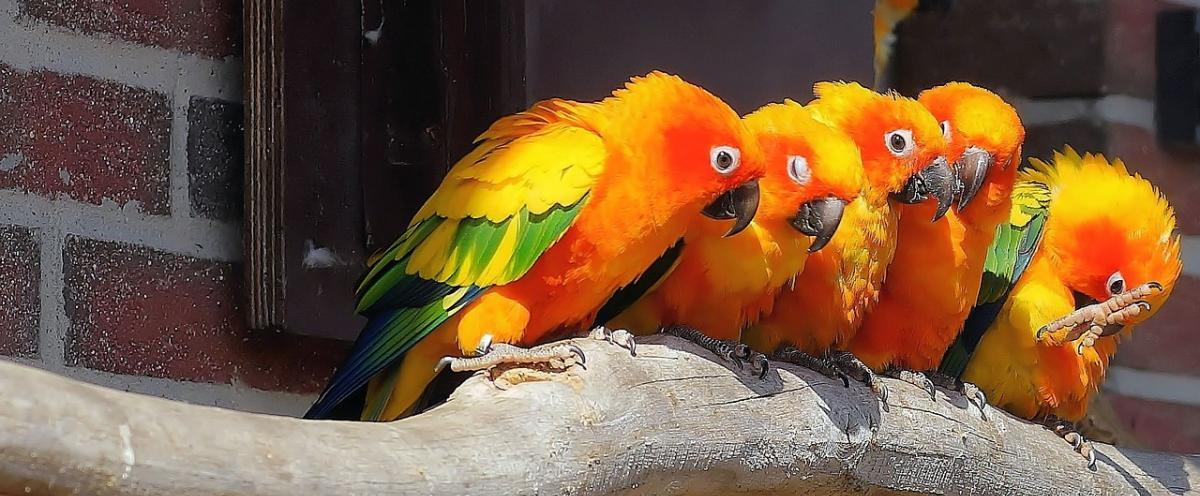 Papageienfutter Ratgeber