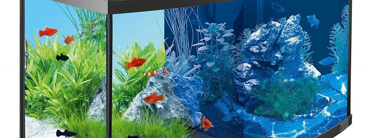 Tetra Aquarium Vergleich