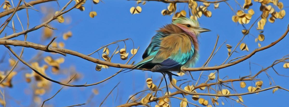Vogel Transportkäfig Vergleich