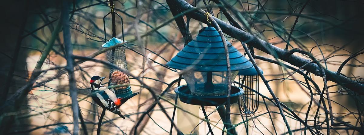 Vogelfutterhaus Vergleich