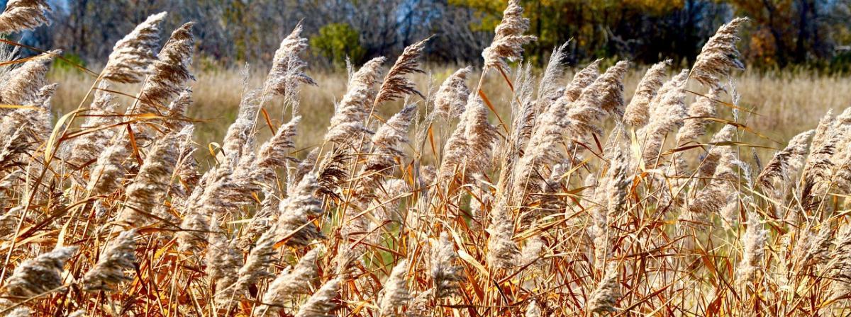 Weizengraspulver Vergleich