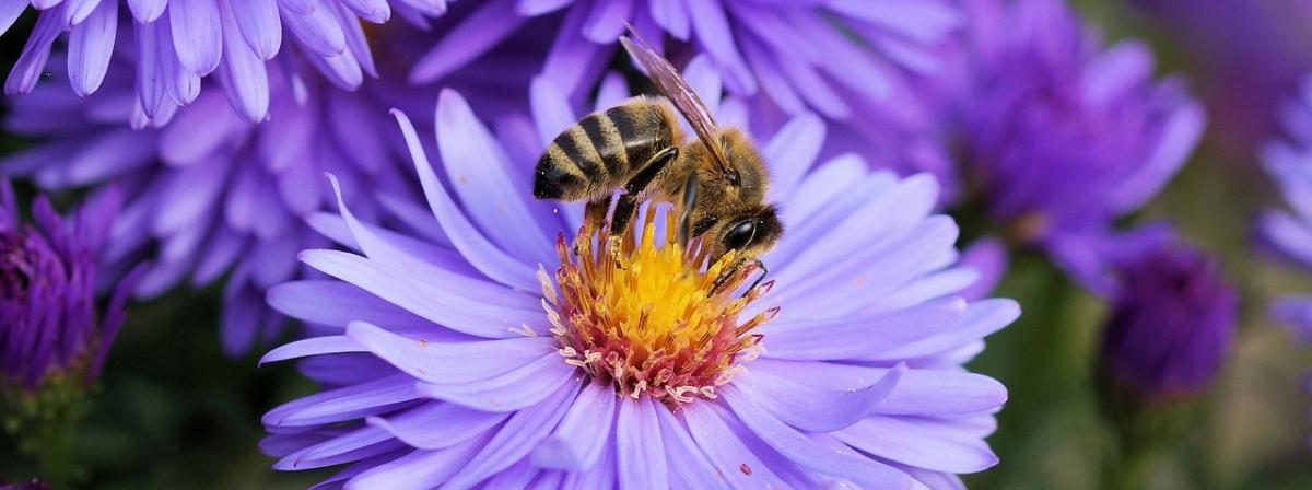 Bienenwachs Ratgeber