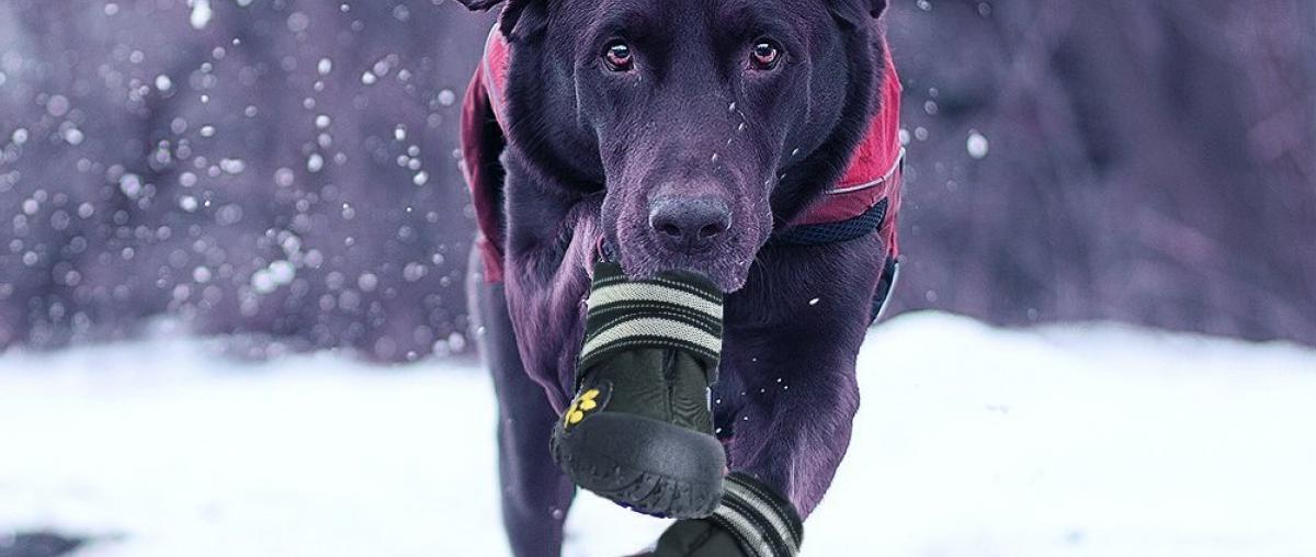 Hundeschuhe Vergleich