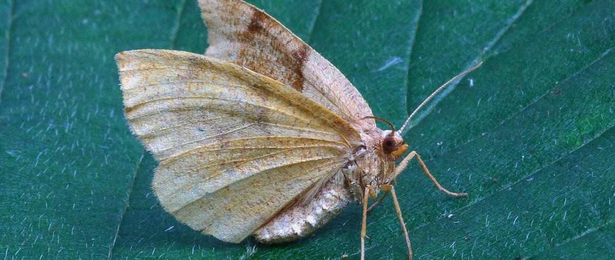 Natürlicher Mottenschutz Vergleich