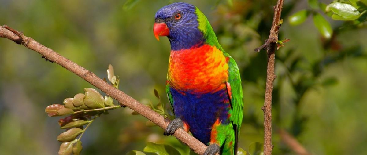 Papageienkäfig Vergleich