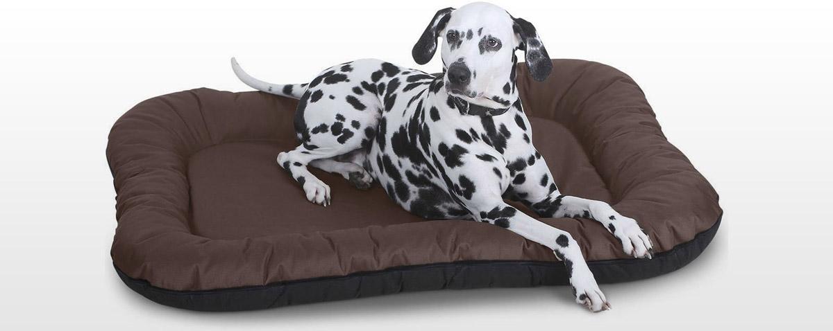 Hundekissen im Test und Vergleich