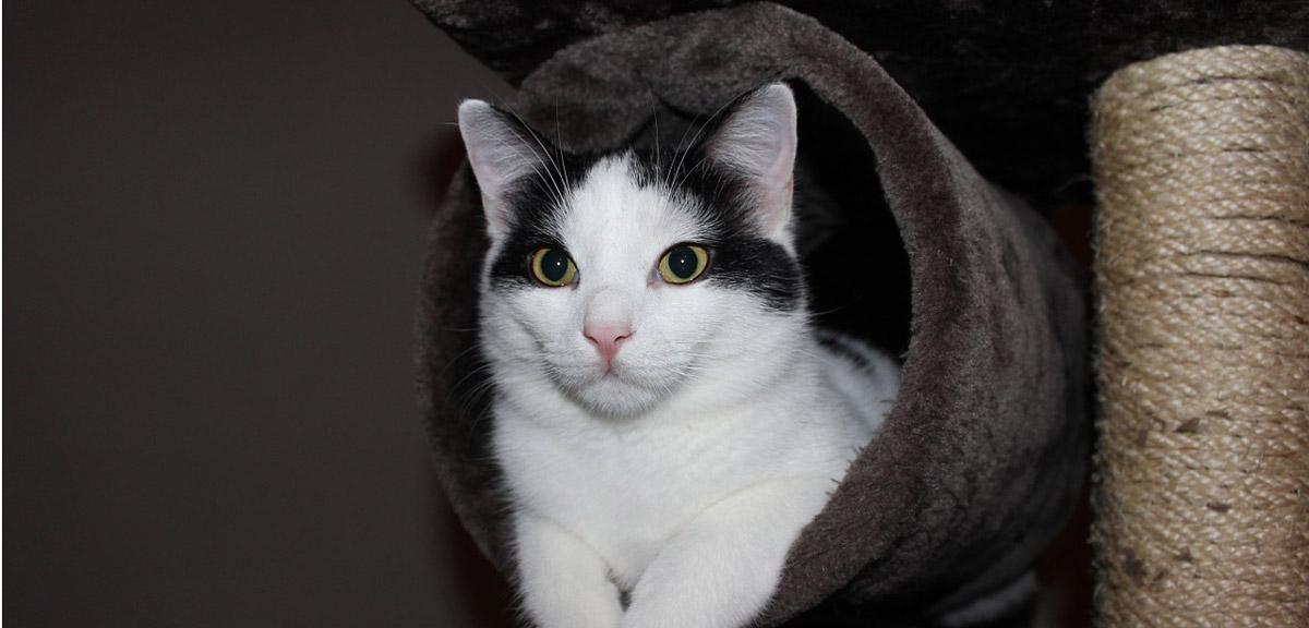 Der Kratzbaum ist ein wichtiger Bestandteil für eine Katze
