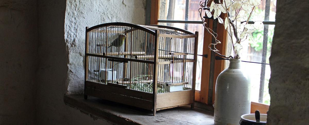 Vogelkäfige im Vergleich