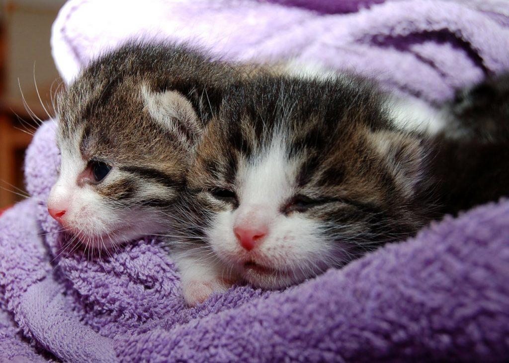 Die besten Katzenkörbe im Vergleich. Schauen sie sich die Testsieger bei Stiftung Warentest, Ökotest & Co an.