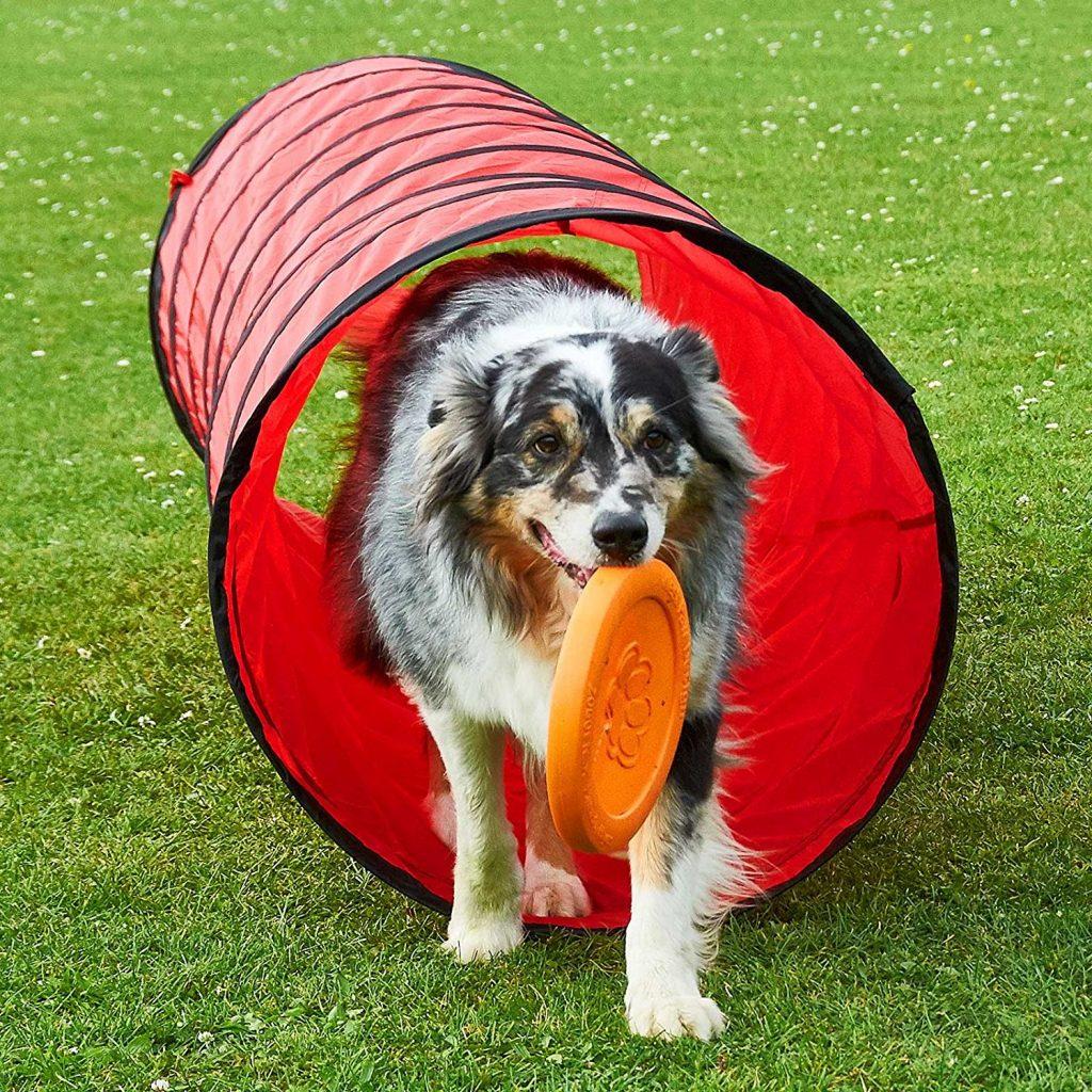 Spiel- und Spaß-Tunnel für Hunde