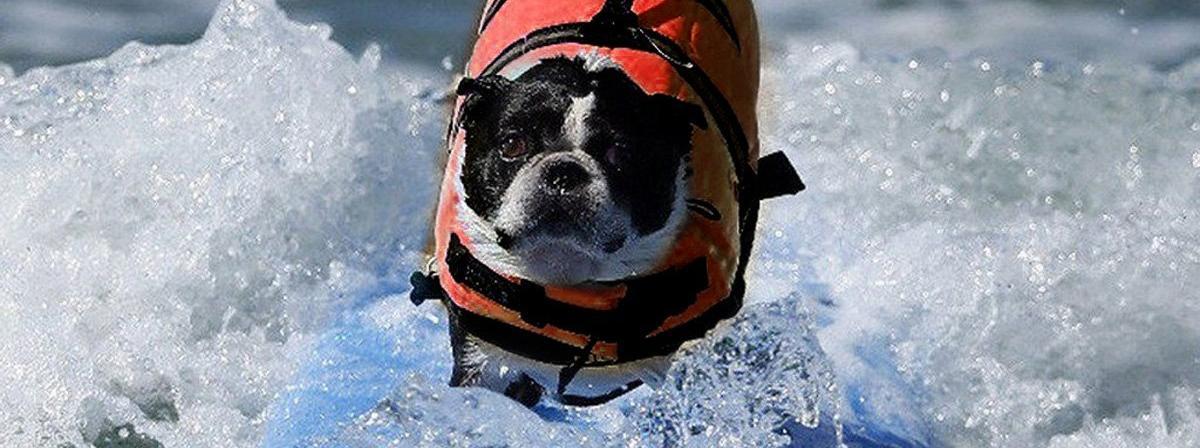 Hunde Schwimmhilfe Vergleich