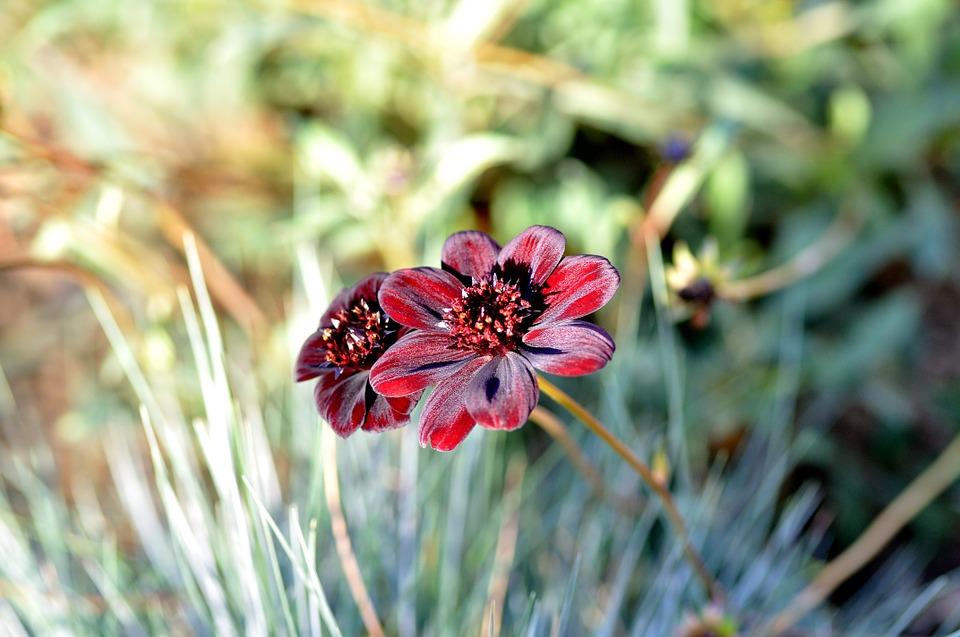 Blumensamen Tipps, Vergleich und Infos