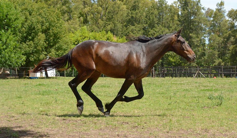 Hufpflege Pferd