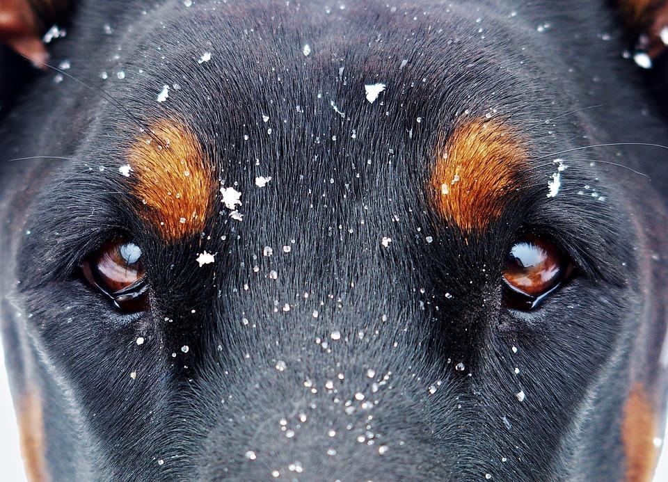 Hunde Augenpflege Tipps: Schauen sie sich die Testsieger bei Stiftung Warentest, Ökotest, ETM-Magazin & Co an.