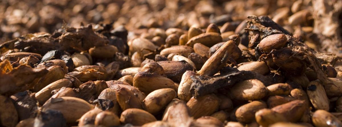 Kakaonibs Vergleich