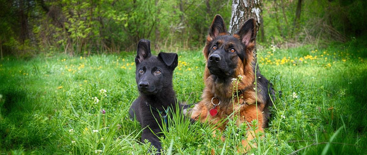 Hunde Nahrungsergänzungsmittel Tipps