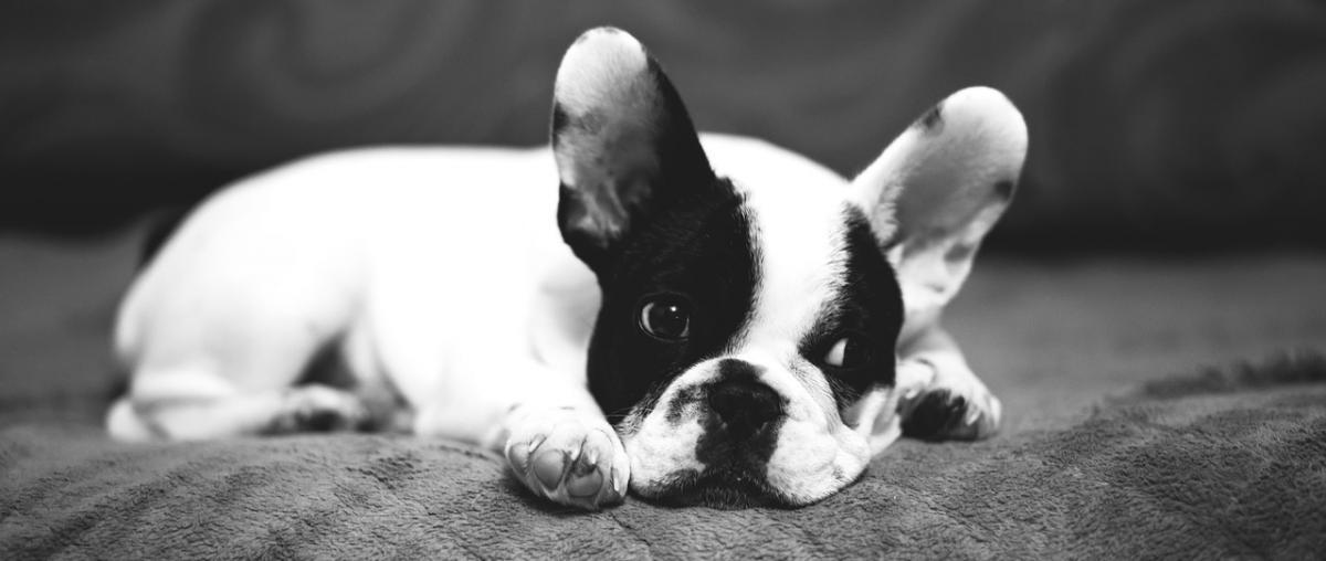 Lachsöl für Hunde Vergleich