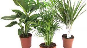 Pflanzen Set Bestseller