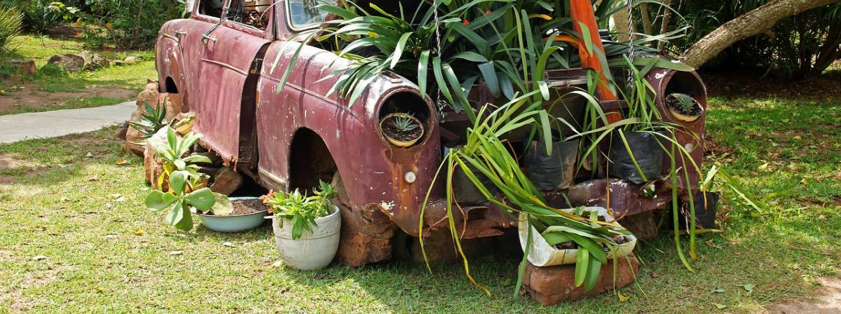 Pflanzen Set Tipps