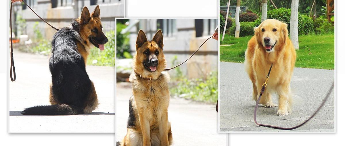 Hunde Lederleine Vergleich