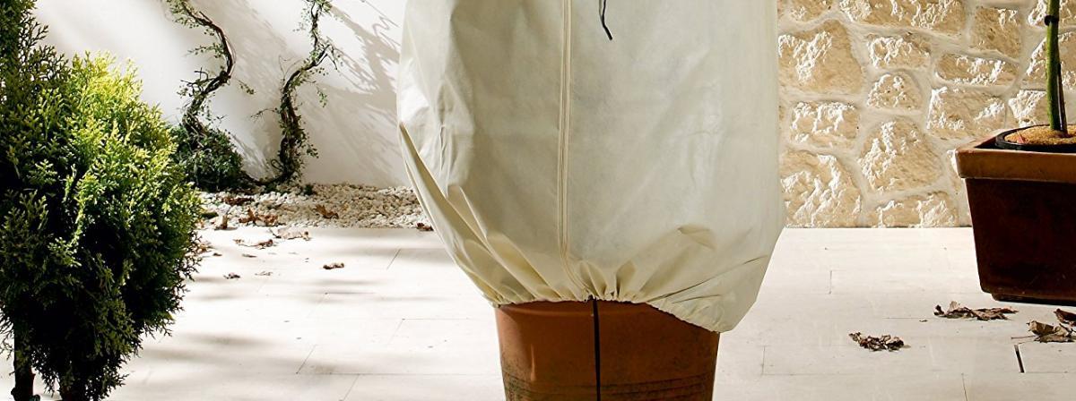 Winterschutz für Pflanzen Ratgeber