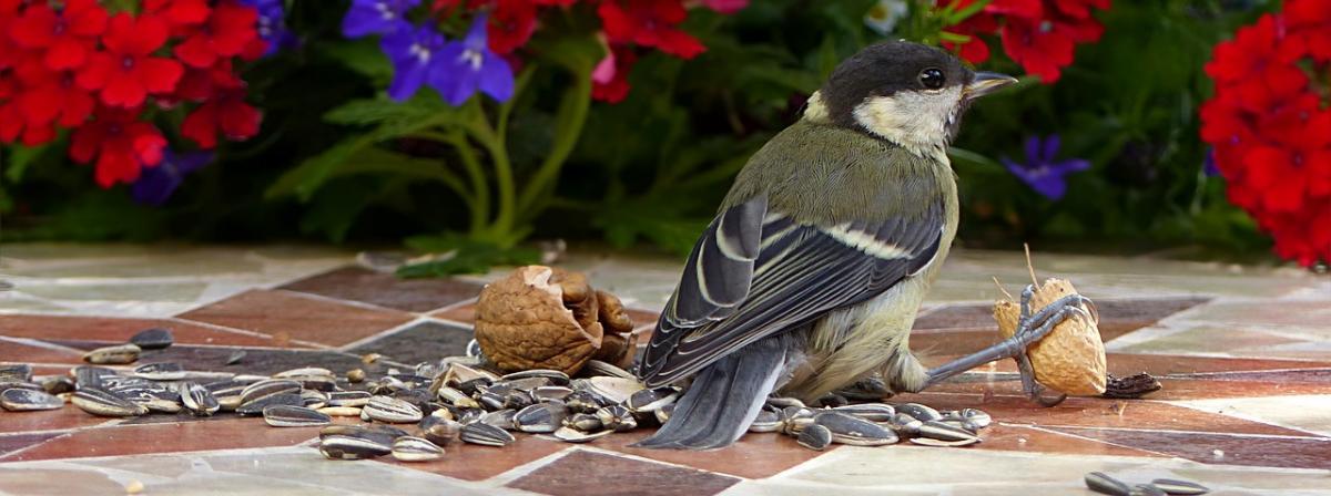 Vogelfutter Ratgeber