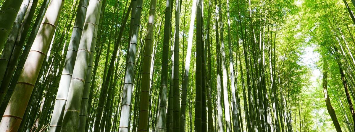 Bambusrollo Ratgeber