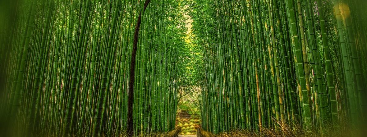 Bambusvorhang Test Vergleich Testberichte 2019