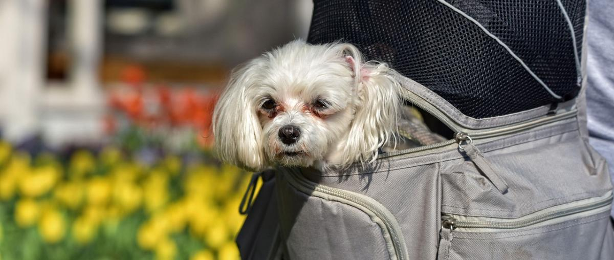 Hunderucksack Ratgeber