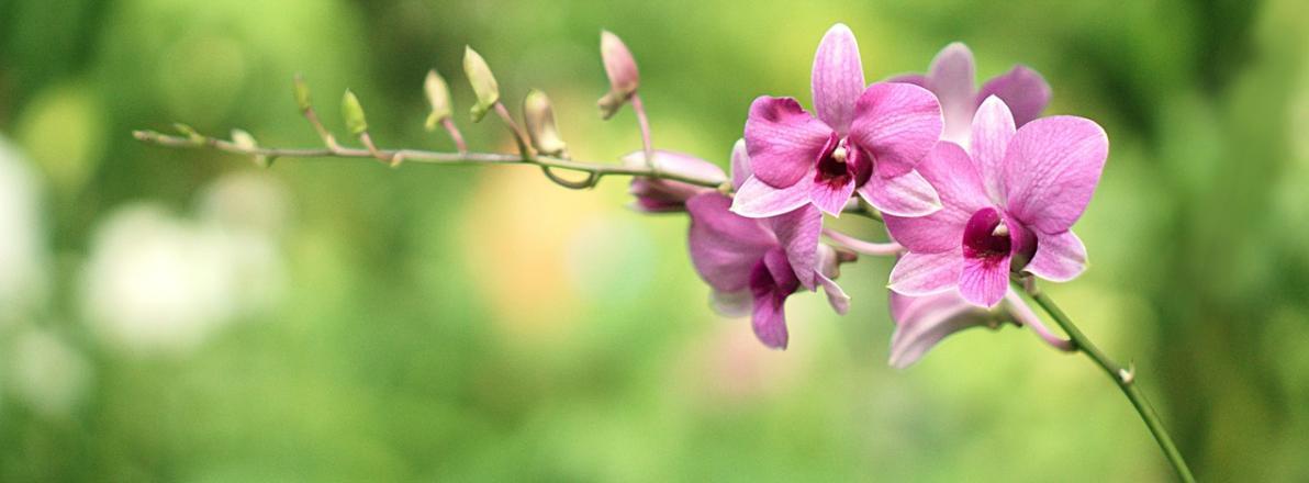 Orchideenerde Ratgeber
