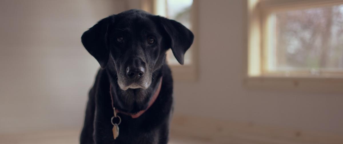 Hundefutter Senior Ratgeber