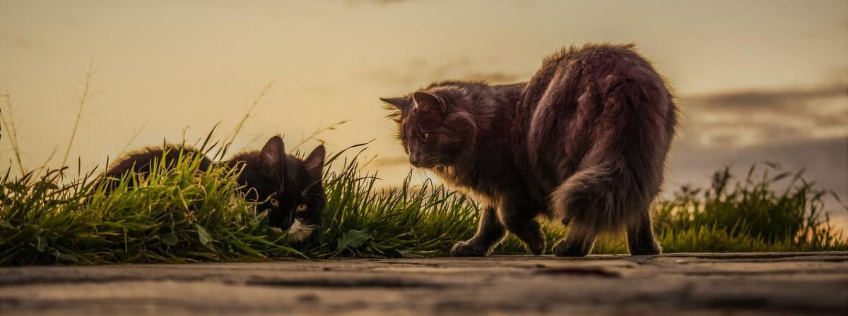 Katzenfalle Ratgeber